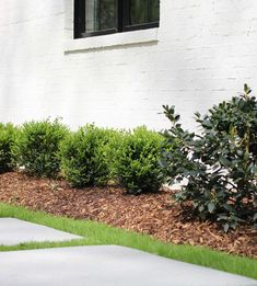 Round medium-sized Boxwood - includes Winter Gem, Golden Dream, and Green Mound Boxwoods Shrubs For Landscaping, Front House Landscaping, Garden Shrubs, Modern Landscaping, Landscaping Ideas, Small Gardens, Outdoor Gardens, Box Wood Shrub, Evergreen Landscape