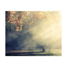 Autumn Landscape Photograph sun rays golden trees heavenly smokey... ($30) ❤ liked on Polyvore featuring home, home decor, wall art, autumn trees, tree wall art, landscape wall art, fall home decor and photo tree