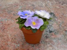 Pansy flower — Flowers