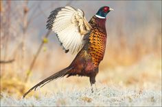 Pride and glory by Marcin Perkowski on 500px