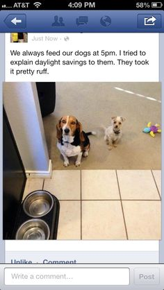 They have no concept of time. lol poor pups!