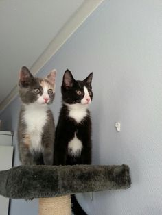 Brother and sister seeing birds for the first time!!!!! http://ift.tt/2iFmR4W