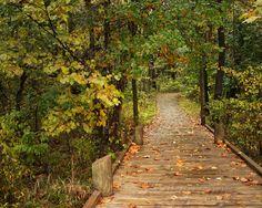 Autumn Pathway  #fall #landscape #photography  https://www.facebook.com/Lynette.Blecha.Photography