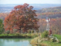 Fall oak and pond with windmill...Beautiful country