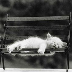 Cat nap, what a week its been Pretty Cats, Beautiful Cats, Animals Beautiful, Cute Little Kittens, Kittens Cutest, Baby Animals, Funny Animals, Cute Animals, I Love Cats