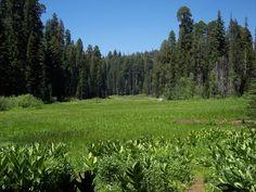 I parchi nazionali della California