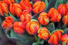 Dutch Orange Tulips by Jenny Rainbow.The bunch of Dutch orange tulips on the display of Amsterdam flower market. Art Prints For Home, Home Art, Fine Art Prints, Amsterdam Flower Market, Rainbow Coffee, Framed Art, Framed Prints, Curtains For Sale, Pillow Sale