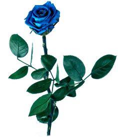 Flores naturales preservadas
