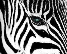Zebra Green Eye Animal Photography Decorative Art Poster ... https://www.amazon.com/dp/B00SLT4EUO/ref=cm_sw_r_pi_dp_x_8eE2ybNRF10V0