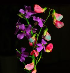 "In flower lore, sweetpeas mean: ""thank you for a swell time."""