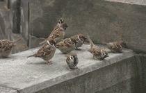 bird-animal-birds-cool-gifs-eccbc87e4b5ce2fe28308fd9f2a7baf3-1044.gif (210×134)