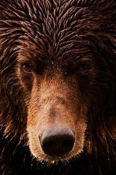 beautiful big bear