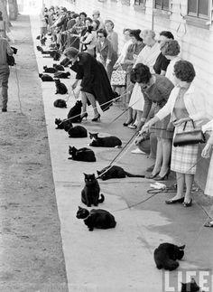飼い主たちの気合っぷりが半端ない! 1961年にハリウッドで行われた黒猫オーディション