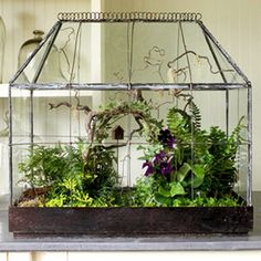Miniature woodland   An antique terrarium becomes a stage for a miniature woodland garden, arbor and all. Ours has flowering Cape primrose, rabbit's-foot fern, golden club moss, black and dwarf mondo grasses, variegated ivy, angel's tears and Kenilworth ivy.