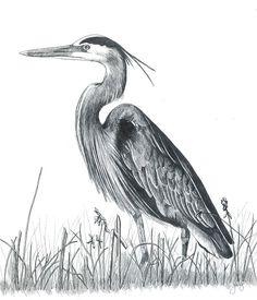 Saatchi Art: Blue Heron Drawing by Judy Horan Bird Drawings, Pencil Art Drawings, Animal Drawings, Animal Sketches, Art Sketches, Vogel Illustration, Heron Tattoo, Blue Heron, Watercolor Bird