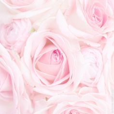"""creepycutieprincess: """" My Edit Pink Wallpaper Girly, Wall Wallpaper, Valentine Day Love, Valentines, Pink Roses, Pink Flowers, Beautiful Images, Beautiful Flowers, Beauty And The Beast Art"""
