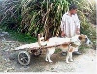 Jugaad at Its Best Funny Puns, Funny Games, Funny Picture Jokes, Funny Pictures, Jokes Quotes, Online Games, Religion, Lol, Humor