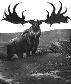 The now extinct Giant Irish Deer; sometimes also called a Giant Irish Elk.