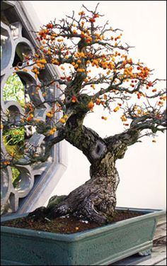 Growing bonsai from their seeds is essentially growing a tree from its seed. Get tips and guidelines on how to grow your first bonsai from its seed phase. Bonsai Art, Bonsai Plants, Bonsai Garden, Garden Plants, Bonsai Forest, Bonsai Meaning, Bonsai Styles, Potted Trees, Miniature Plants