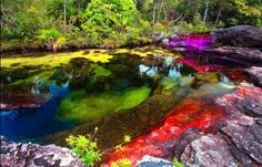 caño cristales colombia - Pesquisa Google