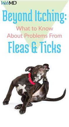Fleas and ticks are tops among the list of concerns for pet owners. But these tiny pests, which bite and feed on your animal's blood, may do much more than just make them itch.