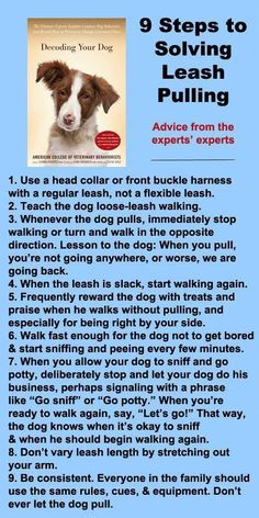 An Kety Pet Care. Puppy Training Tips Your Dog With Thank You For. If you lucked out and got a dog that is naturally obedient then good for you, however if you are like most people, you could use a little help when it come Pitbulls, Rottweilers, Labradors, Education Canine, Tier Fotos, Dog Training Tips, Leash Training, Pitbull Training, Training Classes