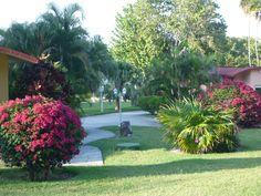 Villa Tropico (Cameleon Villa Jibacoa) - UPDATED 2017 Prices, Reviews & Photos (Cuba) - Resort - TripAdvisor Cuba Resorts, Varadero Cuba, Hotel Reviews, Trip Advisor, Villa, Plants, Photos, Travel, Viajes