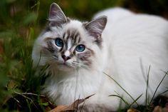 Future, Cats, Animals, Image, Future Tense, Gatos, Animales, Animaux, Animal