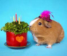 Teacup Guinea Pig Cake - petdiys.com