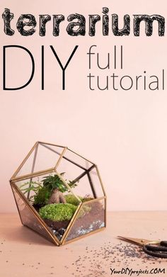 Terrarium Ideas and Tips - Your DIY Projects DIY Terrarium Full Tutorial + Tips and Tricks for a successful Terrarium!DIY Terrarium Full Tutorial + Tips and Tricks for a successful Terrarium! Decor Crafts, Easy Crafts, Easy Diy, Home Decor, Garden Terrarium, Terrarium Ideas, Succulent Terrarium, Succulent Plants, Do It Yourself Projects