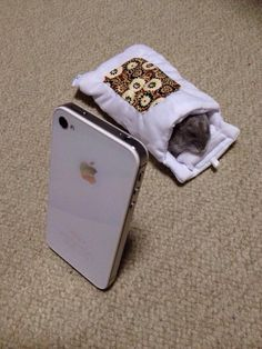 Hamster in a tiny sleeping bag. I think he's watching a movie on that iphone!