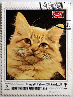 Yemen Republic.  CATS.  Michel 997A, Issued 1970, Photo., Perf. 11 1/2 x 11, 2. /ldb.