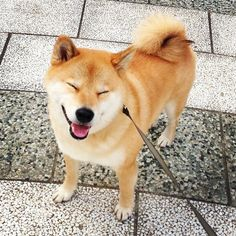 .@marutaro | Bow wow patrol雨やんだからパトロールしてくるねっ(`・ω・´)ゞ | Webstagram - the best Instagram viewer