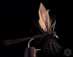 Black Gnat: et meget bra universalmønster, spesielt tidlig på sesongen. http://fluefiskefluer.no/dagens-flue-black-gnat/