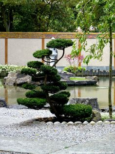 arbusto-jardin-japones.JPG