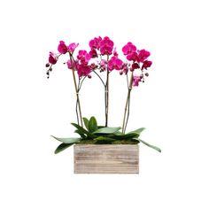 Hot Pink Orchid Arrangement NYC