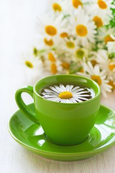How to Grow, Use and Indentify the Chamomile Herb - Health and Wellness - Mother Earth Living