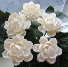 https://flic.kr/p/6ijSfw | 5 ark shell seashell flowers | Flowers made with white ark seashells.