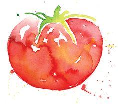 Watercolor tomato by Karen Kurycki