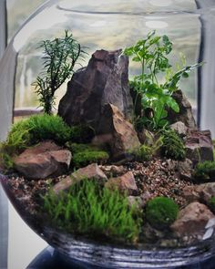 Y'all should see my terrarium creation #staytuned #instagram #jennessy27