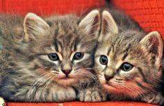 kedi yavruları cats