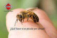 ¿Qué hacer si es picado por abejas? - Trolex Las picaduras de abejas pueden doler mucho y además generar otros malestares incluso severos en la víctima.