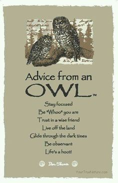 Advice from an Owl. Animals know best.