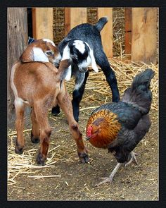 I see a couple miniature milking goats and some chickens in my near future :) can't wait :D