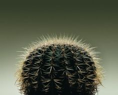 Succulent plants with sharp spines are usually classified as cactus, or cactaceae. Cactus plants typically grow in warm, dry regions and require minimal watering or fertilization to thrive. There are ...