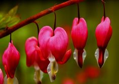 10 Unique Flowers from all around the World