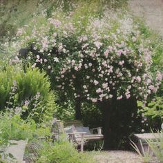 Any Modern Country Garden has to have climbing roses. It's a given, right? So, with that decision made, I'm often asked, which is the best ...