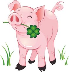 Pig with a 4-leaf clover