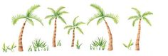 This pretty palm tree wall stencil border is so attractive in a Florida room. Tree Stencil For Wall, Tree Wall, Tree Borders, Cactus Plants, Palm Trees, Stencils, Cake Decorating, Garden Ideas, Room