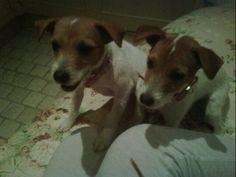 Celebrity Pet Twitpics!